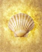 Sonne, Strand und Meer - W�hlen Sie Ihr Reiseziel