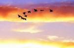 Frei wie ein Vogel - die Welt per Rundreise entdecken