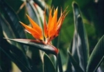 Madeira-Pflanzenwelt